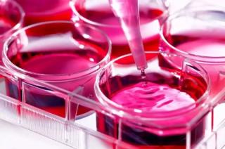 全世界的癌症研究都用错了实验材料?