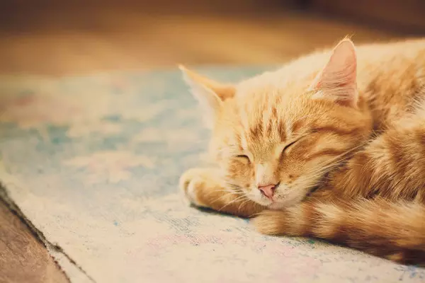 睡意如潮:日本公司想方设法让雇员补眠