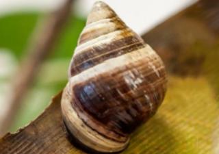 蜗牛乔治的去世带给我们的思考