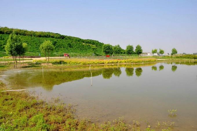 [贴图]湿地小景