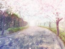 情人节贺图:你知道吗?樱花飘落的速度是秒速五厘米