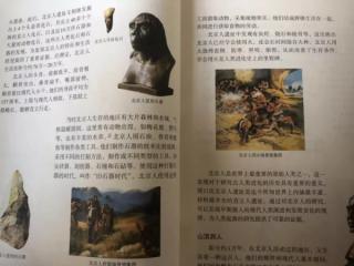 周口店的北京猿人,是我们的祖先吗?