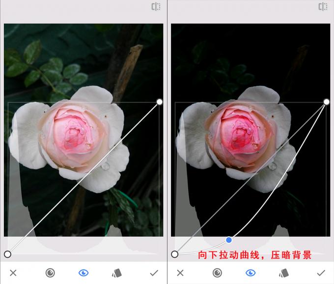 snapceed flower 02