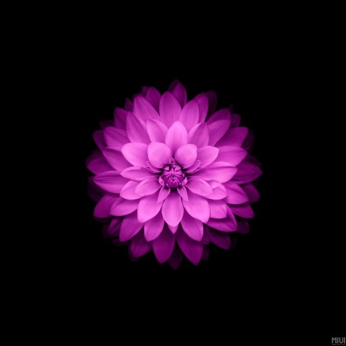 black ground flower01
