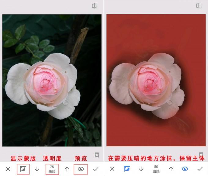 snapceed flower 05
