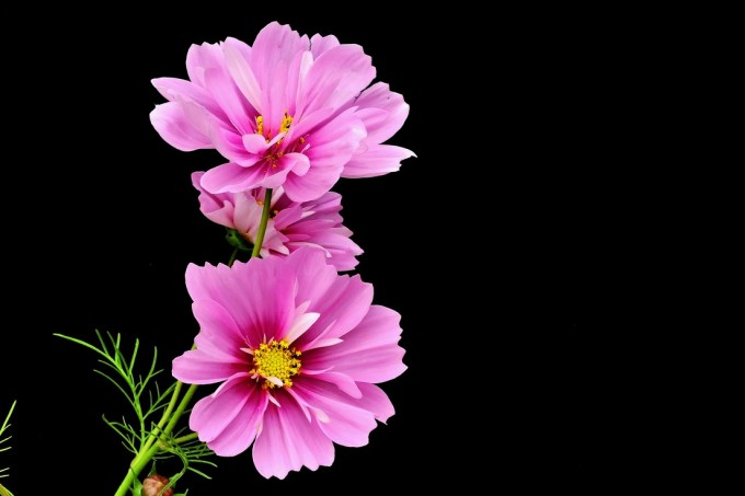 black ground flower02