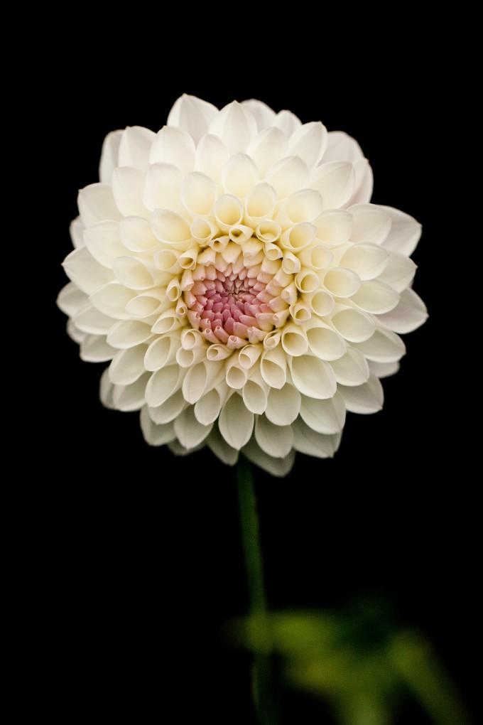 black ground flower05