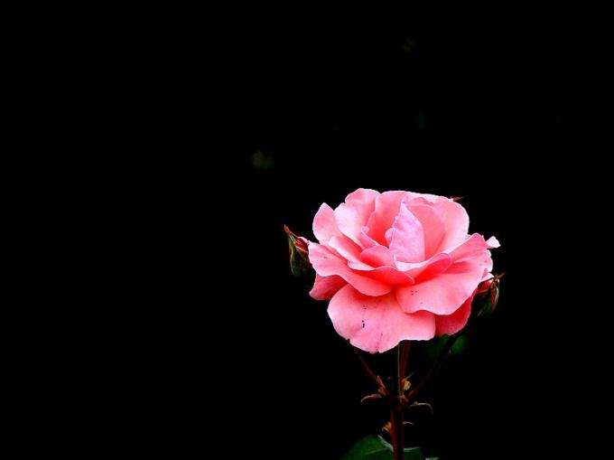 black ground flower04