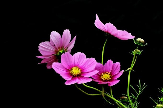 black ground flower03