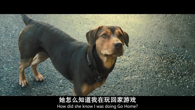 一条狗的回家路