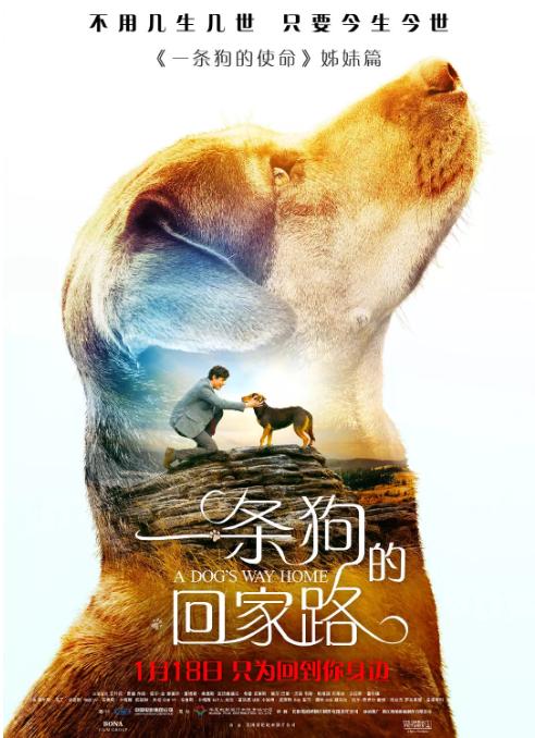 一条狗的回家路.HD.MP4.2019.美国.剧情.冒险.中文字幕
