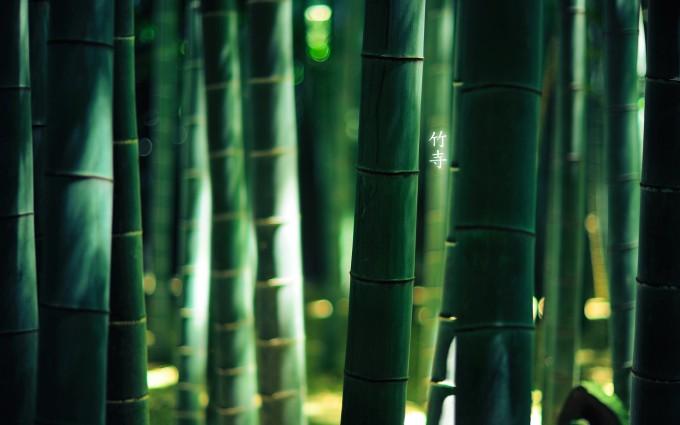 竹林深处的翠绿植物壁纸