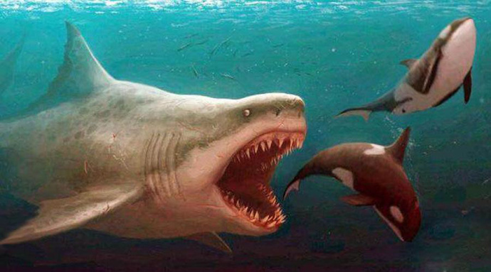 2018.[动作/科幻][巨齿鲨/The Meg 迅雷百度云高清]图片 第3张