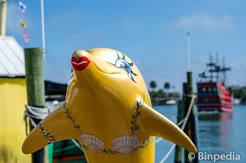 Dolphin watch 1