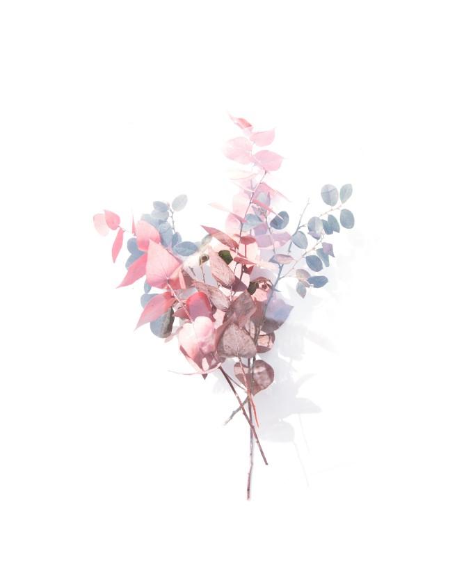 ins小清新色调的花朵摄影创作