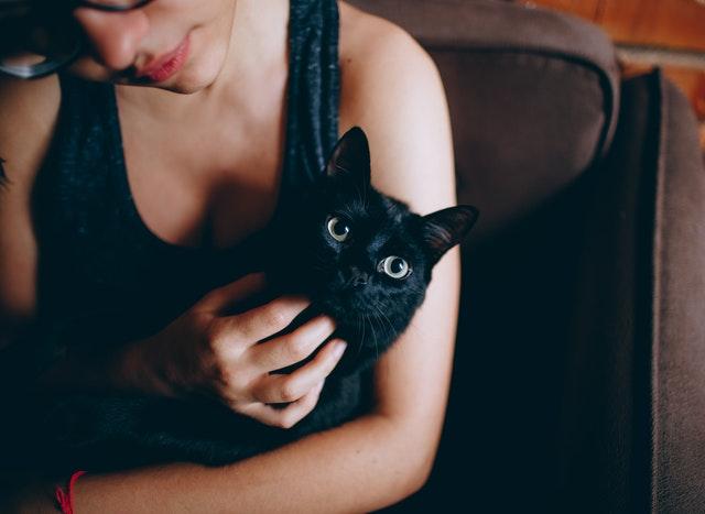 我与那个上班遛猫、追剧的小伙子(文中均为化名)
