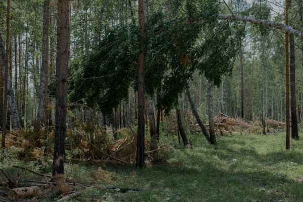 西伯利亚一处伐木点的树桩和伐倒的树木。中国对木材的庞大需求为这个地区带来了就业和资金,但也加剧了人们对森林砍伐的担忧。