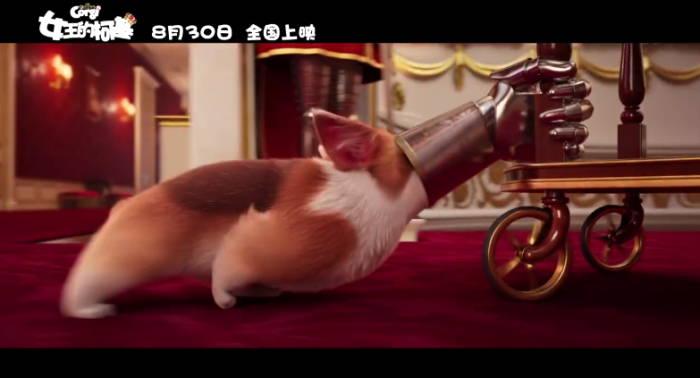 动画电影《女王的柯基》公布中文定档预告 8月上映-玩懂手机网 - 玩懂手机第一手的手机资讯网(www.wdshouji.com)