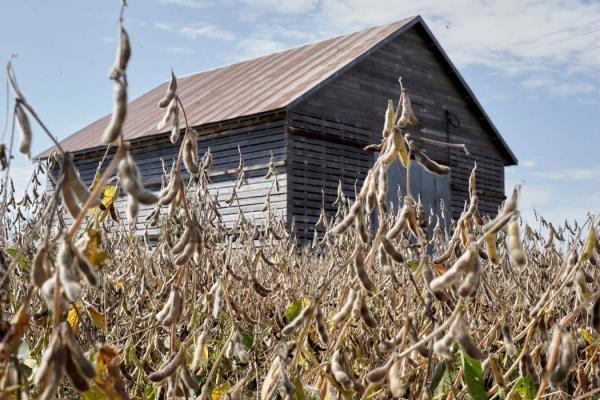 作为协议的一部分,中国将增加对美国农产品的购买,比如内布拉斯加州格林伍德农场生产的大豆。