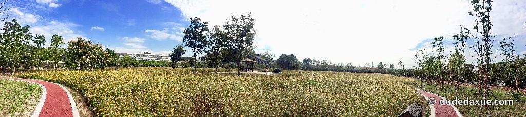南中医 花园全景
