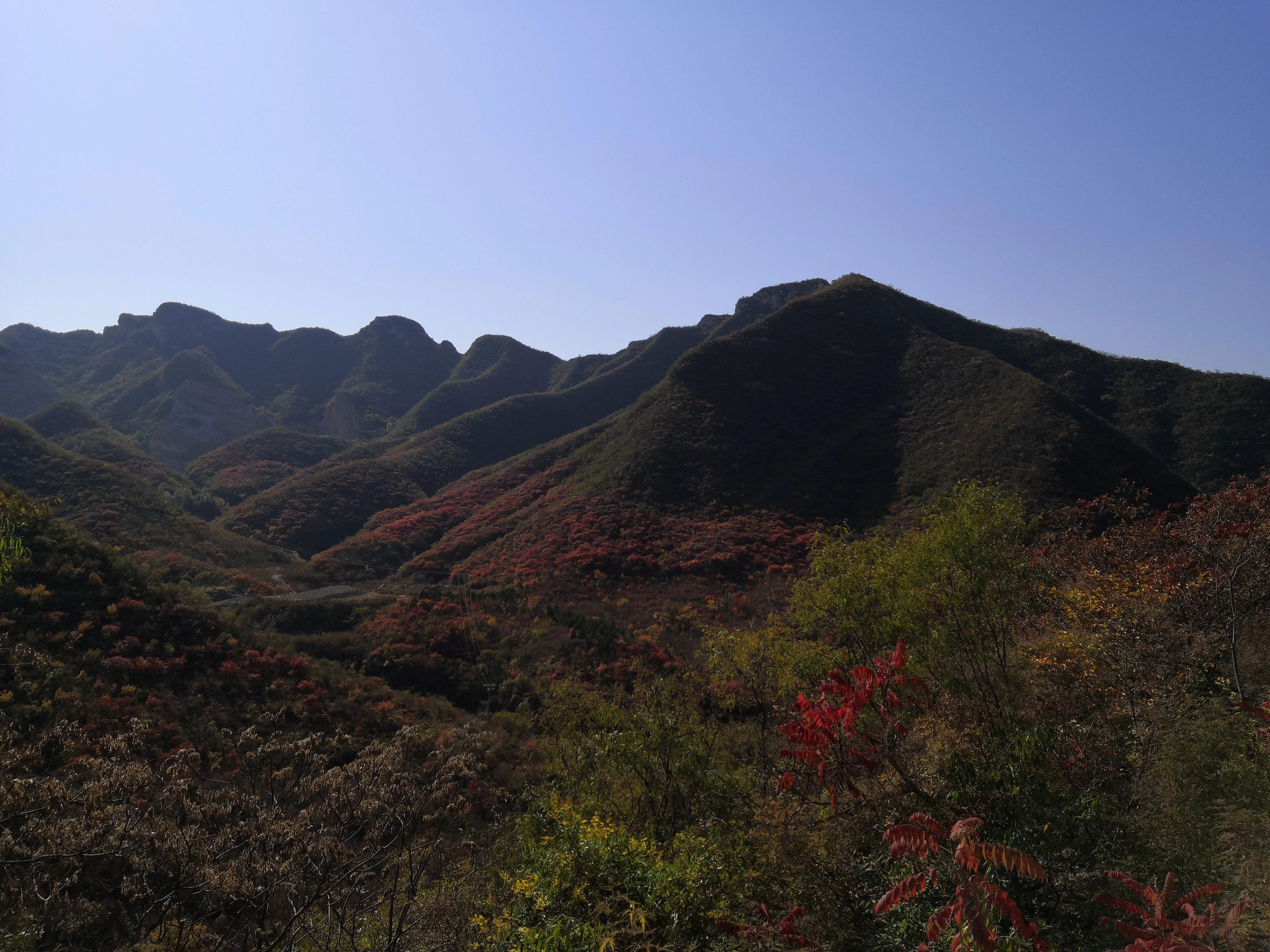 漫山遍野的红叶