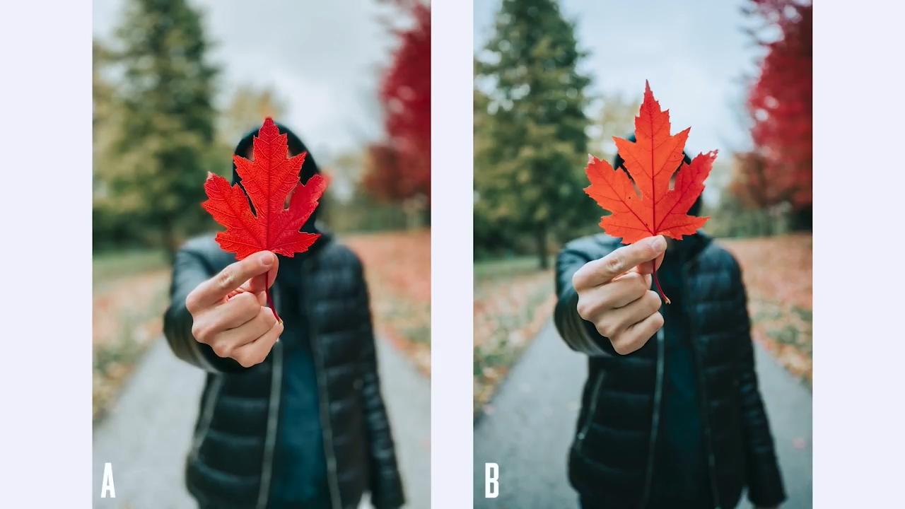 苹果iPhone 11 Pro的拍照性能足以媲美「佳能1DX Mark II」专业单反
