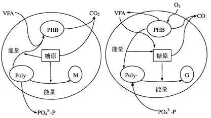 聚磷菌除磷的原理及除磷效果的影响因素