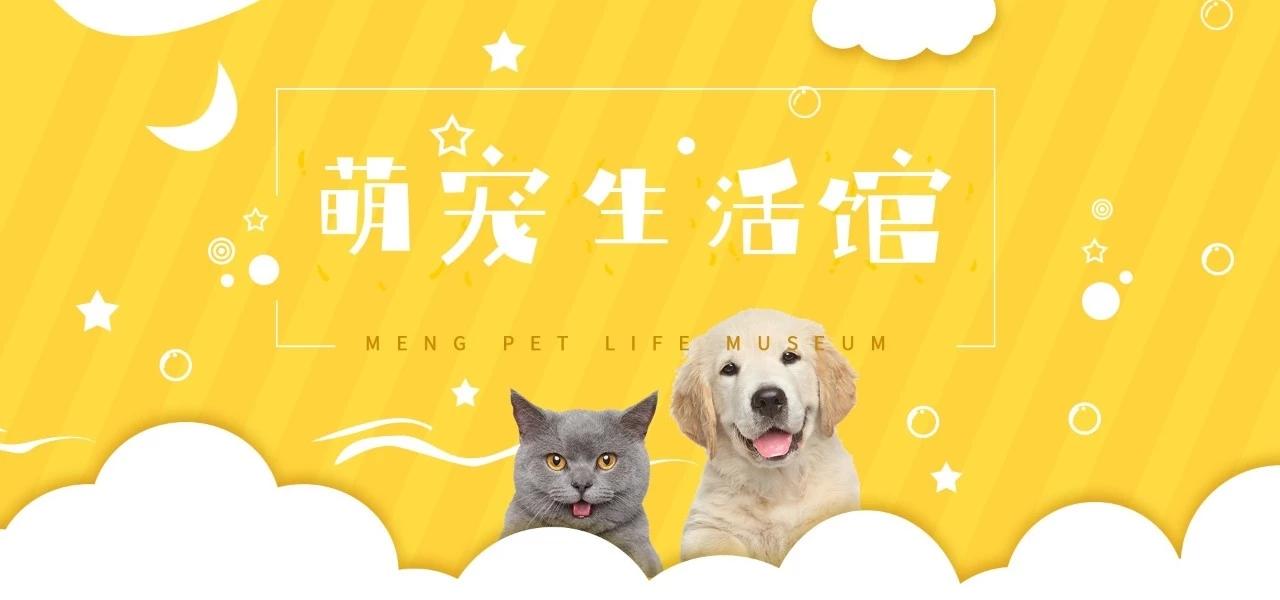 """太棒了!最新免费字体""""庞门正道轻松体""""发布!插图(15)"""