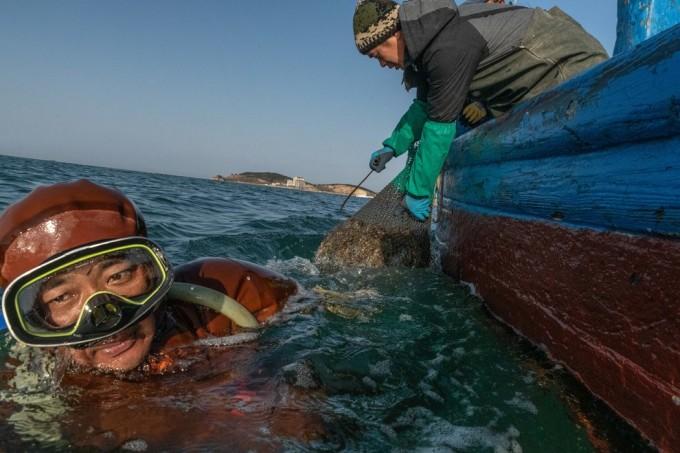 在辽宁半岛外海的广鹿岛附近,一名潜水员带着满网海参浮出水面。中国对海参的需求耗尽了天然资源,但也催生了海参养殖产业。