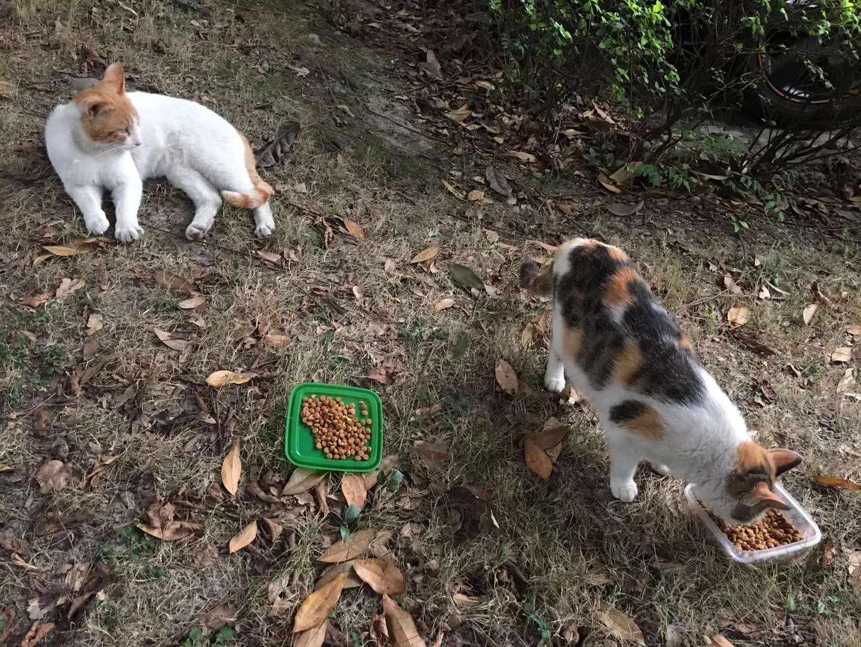 据说草地里可以长出猫,于是试了试