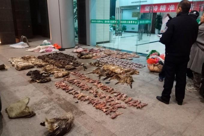 上个月,中国中部广德市,警察从一家涉嫌走私野味的店里查获一批物品。