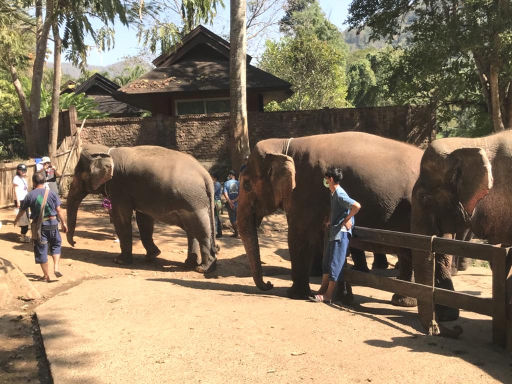HugChang大象保育营